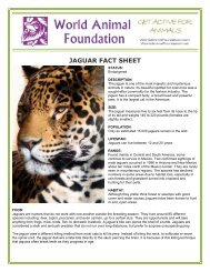 JAGUAR FACT SHEET - World Animal Foundation