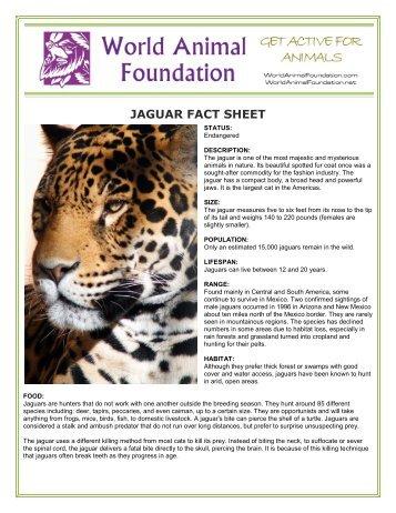 giraffe fact sheet world animal foundation. Black Bedroom Furniture Sets. Home Design Ideas