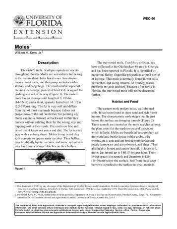 Moles - Polk County Extension Office - University of Florida