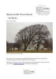 Bäume im Elbe Weser Dreieck - die Buche -