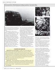 Reintroducing Cattleya Species Into Costa Rica