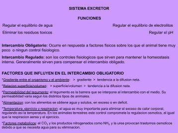 11- Sistema Excretor