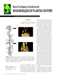 REGENERAÇÃO DE PLANTAS IN VITRO - Biotecnologia