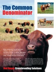 The Common Denominator - Red Angus Association of America
