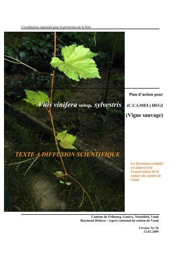 Vitis vinifera subsp. sylvestris - Université de Neuchâtel
