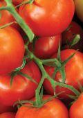South Australian Food Strategy 2010 - 2015 - SA.Gov.au - Page 2