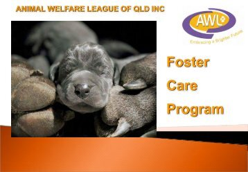 Developing a Foster Care Program - Michelle Critchley, Outreach ...