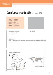 Carduelis carduelis Linnaeus, 1758