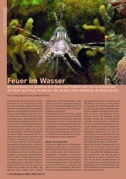 Feuer im Wasser - Birseck Magazin
