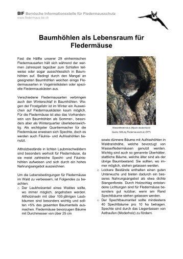 Baumhöhlen - Fledermaus BE