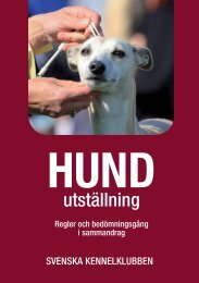 Hundutställning - Svenska Kennelklubben