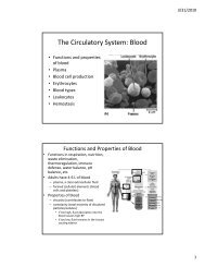 The Circulatory System: Blood