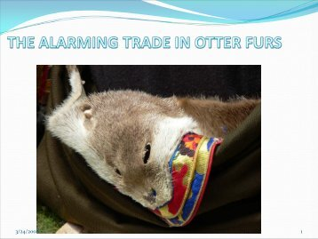 Alarming Trade in Otter Furs - Otter Specialist Group