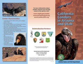 Condor Brochure (PDF file) - Arizona Game and Fish Department