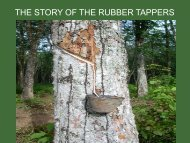THE STORY OF THE RUBBER TAPPERS - Forum for Urban Future in ...