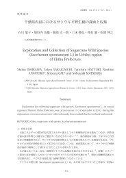 千葉県内房におけるサトウキビ野生種の探索と収集