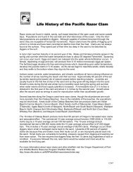 Life History of the Razor Clam - Oregon State 4-H