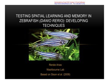 TESTING SPATIAL LEARNING AND MEMORY IN ZEBRAFISH ...