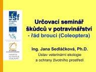 řád brouci (Coleoptera) – Prezentace