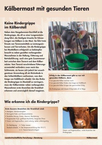 Kälbermast mit gesunden Tieren - Qualinova AG