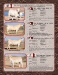 Cowtown Cattle Drive Sale - American International Charolais ... - Page 4