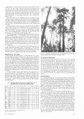 Zum Wachstum von Eichensaat unter Kiefernschirm im Forstamt ... - Seite 4