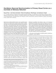 Oscillatory Neuronal Synchronization in Primary Visual Cortex as a ...
