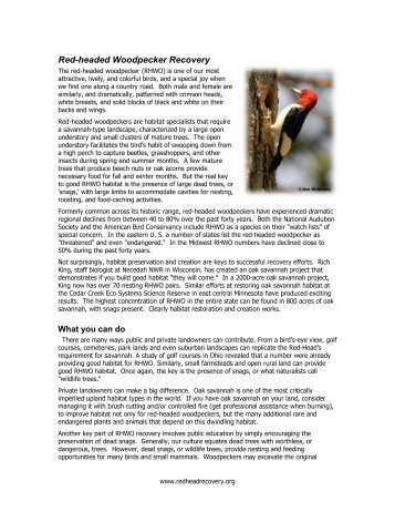 Red-headed Woodpecker Recovery - The Red-headed Woodpecker