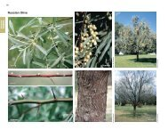 Russian Olive - Invasive.org