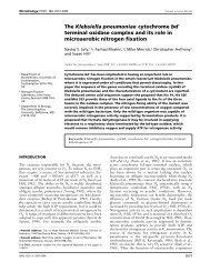 The Klebsiella pneumoniae cytochrome bd - John Innes Centre