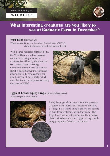 What interesting creatures are you likely to see at Kadoorie Farm in ...