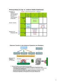 1 S N C H O / O S N C H2O / O2 Photosynthese im Vgl. m ... - Lossl.de