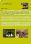 Les abeilles sauvages de Bruxelles - Page 2