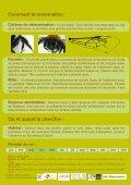 Les abeilles sauvages de Bruxelles - Page 3