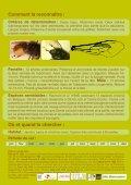 Les abeilles sauvages de Bruxelles - Page 5