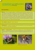 Les abeilles sauvages de Bruxelles - Page 6