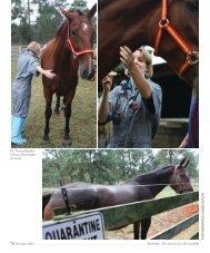 Pine Straw - North Carolina State University College of Veterinary ...