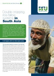 Double cropping rice-fallow systems in South Asia - Research Into Use