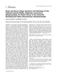 Brain and Sense Organ Anatomy and Histology of the ... - Lannoo Lab