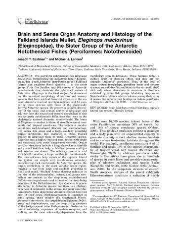 Brain and Sense Organ Anatomy and Histology of the ... - Lannoo Lab