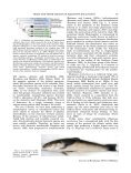 Brain and Sense Organ Anatomy and Histology of the ... - Lannoo Lab - Page 2