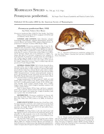 Peromyscus pembertoni