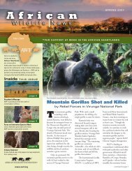 Mountain Gorillas Shot and Killed - African Wildlife