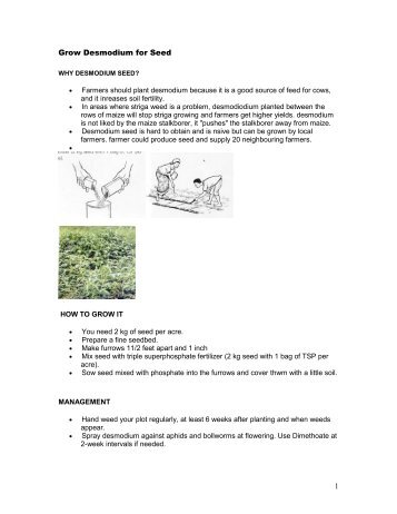 Growing Desmodium for Seed