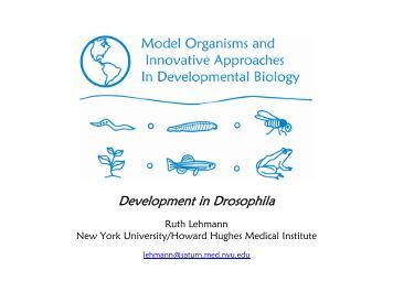 developmental biology study guide