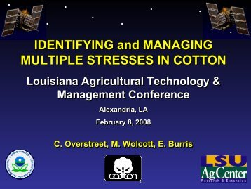 Identifying and Managing Multiple Stresses in Cotton - Louisiana ...