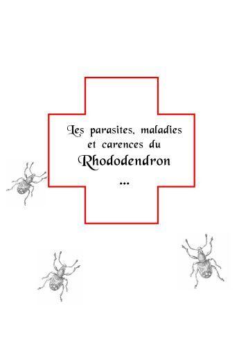 les maladies carences et parasites rhododendron et azal e. Black Bedroom Furniture Sets. Home Design Ideas