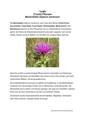 Teil69 (Tracht) Pflanzen Mariendistel Silybum maranium