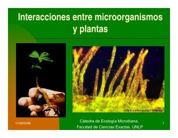 Interacciones entre microorganismos y plantas