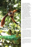 Madagascar_Wildside_.. - Jenman African Safaris - Page 3
